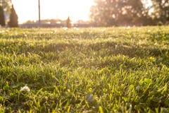 Дневной свет Стоковые Фотографии RF