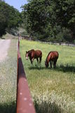 Дни лошади Стоковые Изображения