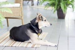 Дни собаки лета стоковое изображение