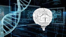 ДНК и человеческий мозг иллюстрация штока