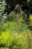 Дно моего сада стоковые фото