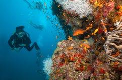Дно моря водолаза акваланга женщины исследуя Стоковое Изображение RF