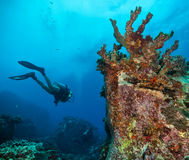 Дно моря водолаза акваланга молодой женщины исследуя Стоковые Изображения RF