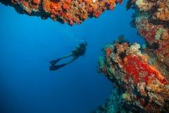 Дно моря водолаза акваланга молодой женщины исследуя Стоковое фото RF
