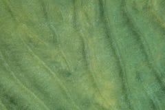 Дно моря - зашкурьте ` дюн ` в отмелой воде океана, стоковая фотография rf