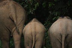 Дно слона стоковые изображения rf