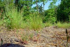 Дно травы Стоковое фото RF