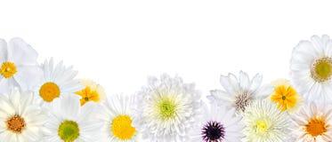 дно цветет белизна выбора рядка Стоковые Фотографии RF