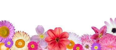 дно цветет белизна розового красного рядка различная Стоковое Фото
