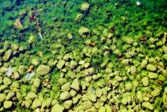 Дно Green River Стоковое Изображение RF