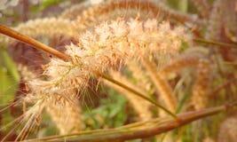 Добросердечный цветок Стоковая Фотография