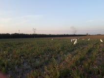 Доброта crope воды поля природы стоковое изображение