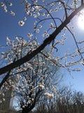 Добро пожаловать весна, пахнуть цветка стоковое фото rf