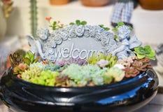 Добро пожаловать сад завода Стоковая Фотография