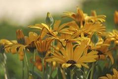 Добро пожаловать весна - 2 Стоковое Изображение RF