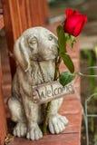 Добро пожаловать собака стоя на крылечке, задерживая розу Стоковые Фотографии RF