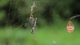 Добыча пауков видеоматериал