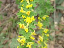 Довольно желтый цвет - зеленый цветок Стоковое фото RF
