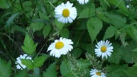 Довольно маленькие цветки стоковое изображение rf