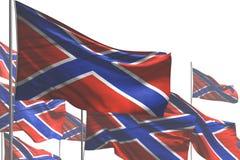 Довольно много флагов Novorossia развевать изолированных на бело- любую иллюстрацию флага 3d торжества иллюстрация штока
