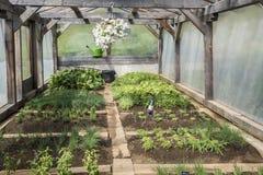 Довольно самодельный огород Стоковое Фото