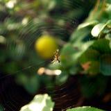 Довольно страшная пугающая сеть паука в саде стоковое изображение rf