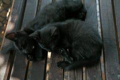 2 довольно черных киски спать на стенде в летнем дне Стоковые Изображения RF