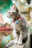 Довольно азиатский кот стоковые изображения