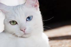 Довольно белый кот с различными покрашенными глазами стоковая фотография rf