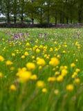 Довольно зеленый луг с сериями красочной весны цветет Стоковые Фотографии RF