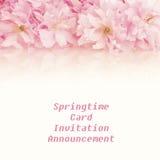 Довольно розовый вишневый цвет весны связывает через верхнюю часть или выше с пустыми комнатой или космосом предпосылки ниже для э Стоковые Изображения RF