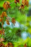 Довольно страшная пугающая сеть паука на хеллоуин Стоковые Изображения