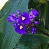Довольно фиолетовые цветки:) Стоковые Фотографии RF