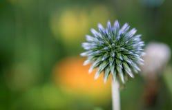 Довольно фиолетовый цветок Стоковая Фотография