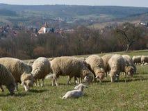 Довольные овцы перед церковью стоковое изображение rf