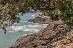 Договор Waitangi заземляет вулканические породы и деревья Pohutukawa стоковая фотография