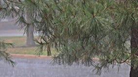Дождевая вода падая на зеленые дождевые капли листьев падая во время тяжелого лета сток-видео