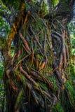 Дождевой лес Новой Зеландии стоковое фото