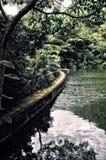 Дождевой лес с запрудой Creque озера в St Croix США Виргинских островах стоковые фотографии rf