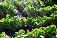 Дождевые воды на натуральных продуктах Стоковое фото RF