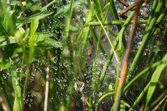 Дождевые капли в сети голубая мягкая сеть подкраской спайдера Стоковые Изображения RF