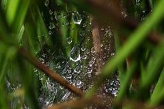 Дождевые капли в сети голубая мягкая сеть подкраской спайдера Стоковая Фотография RF