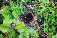 Дождевые капли в сети Паук в отверстии Стоковое Изображение