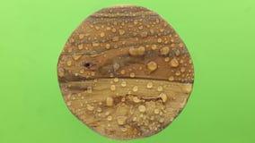 Дождевые капли дунуты отсутствующий сильным ветером от круглой деревянной планки изолировано видеоматериал