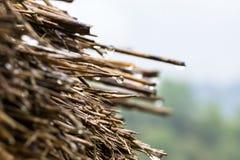 Дождевые капли на крыше сухой травы на местном доме стоковое фото