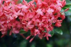 Дождевые капли на цветке Стоковое Фото