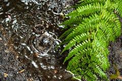 Дождевые капли падают в глубокую лужицу на луге в саде стоковое фото rf