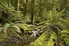 дождевый лес заводи Стоковое фото RF