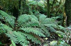 дождевый лес папоротников Стоковое Изображение