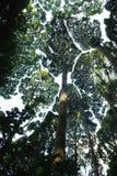 дождевый лес тропический стоковое изображение